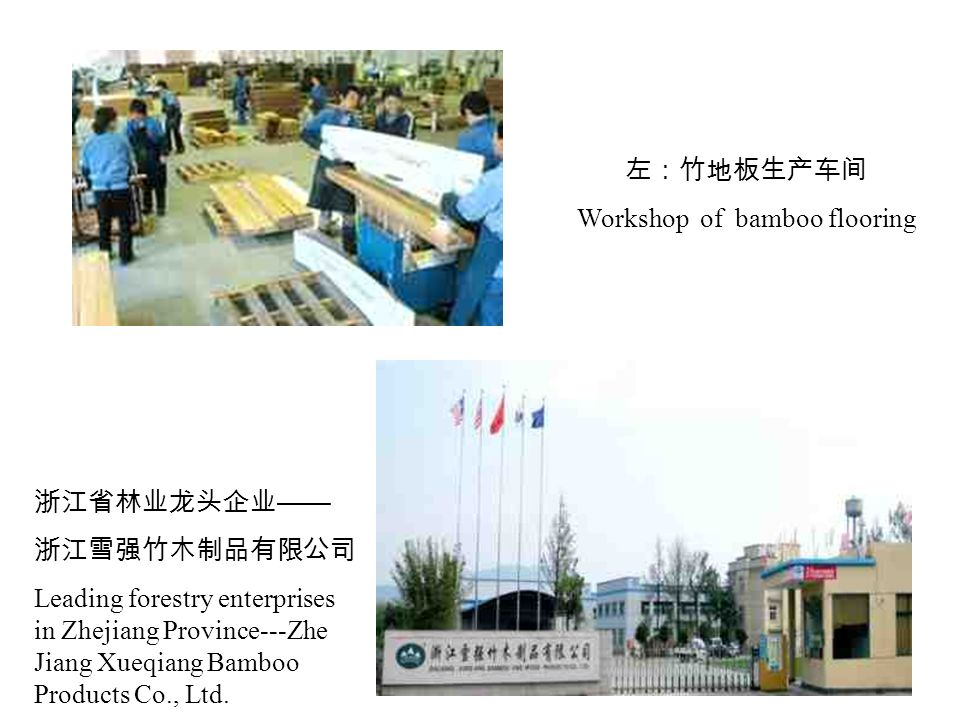 浙江省林业龙头企业 —— 浙江雪强竹木制品有限公司 Leading forestry enterprises in Zhejiang Province---Zhe Jiang Xueqiang Bamboo Products Co., Ltd.