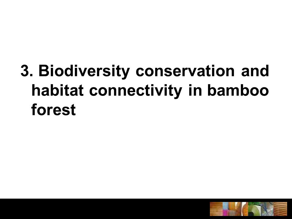 3. Biodiversity conservation and habitat connectivity in bamboo forest
