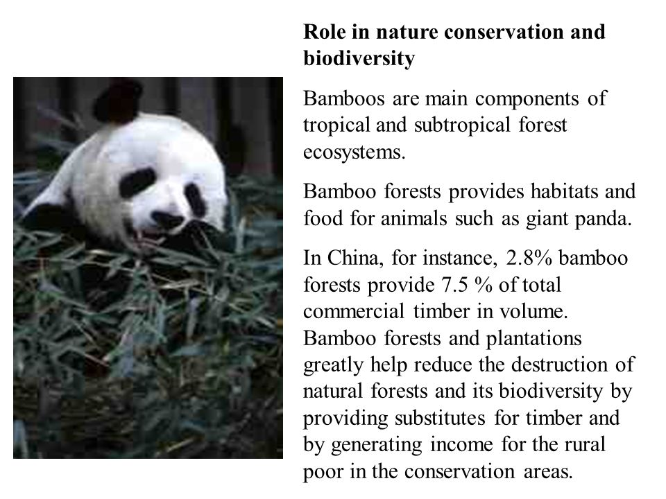 Role in nature conservation and biodiversity Bamboos are main components of tropical and subtropical forest ecosystems.