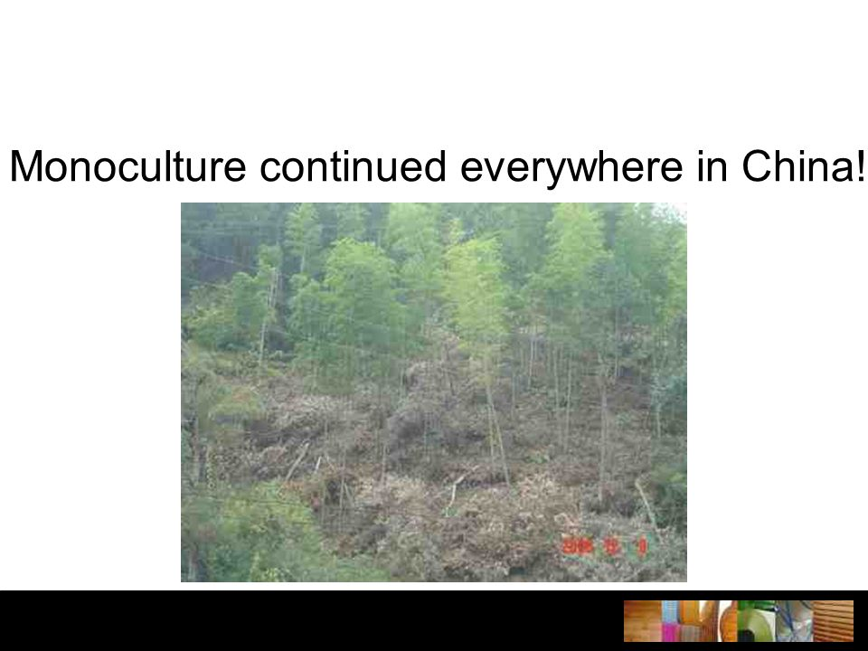 Monoculture continued everywhere in China!