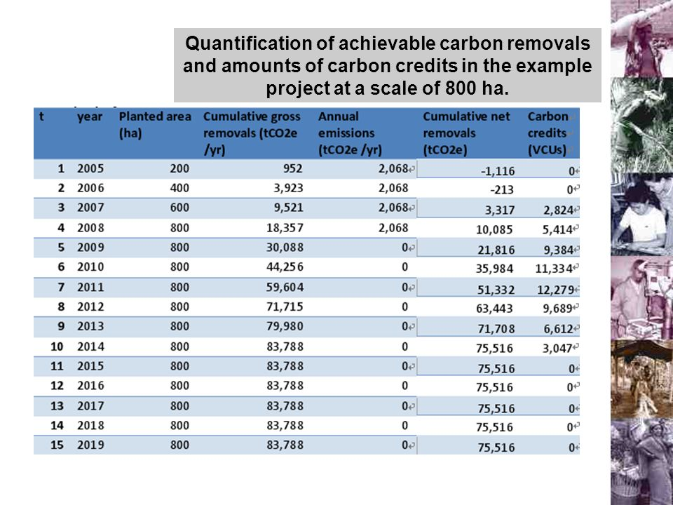 Quantification of achievable carbon removals and amounts of carbon credits in the example project at a scale of 800 ha.