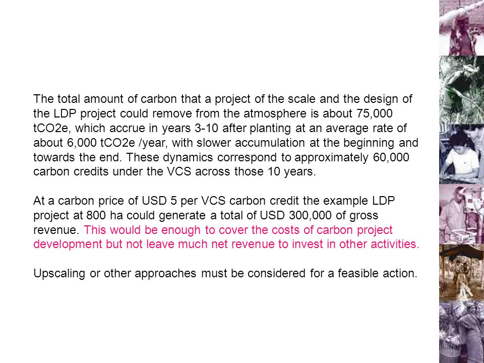 The total amount of carbon that a project of the scale and the design of the LDP project could remove from the atmosphere is about 75,000 tCO2e, which accrue in years 3-10 after planting at an average rate of about 6,000 tCO2e /year, with slower accumulation at the beginning and towards the end.