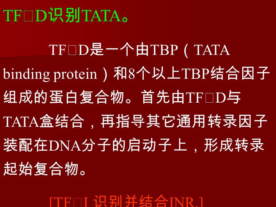 TF Ⅱ D 识别 TATA 。 TF Ⅱ D 是一个由 TBP ( TATA binding protein )和 8 个以上 TBP 结合因子 组成的蛋白复合物。首先由 TF Ⅱ D 与 TATA 盒结合,再指导其它通用转录因子 装配在 DNA 分子的启动子上,形成转录 起始复合物。 [TF Ⅱ I 识别并结合 INR.]