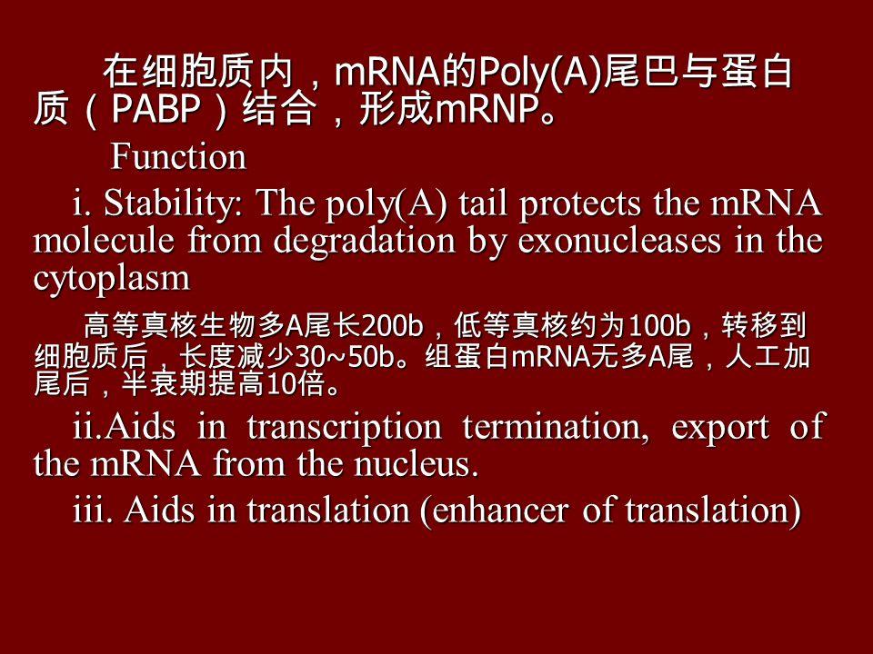 在细胞质内, mRNA 的 Poly(A) 尾巴与蛋白 质( PABP )结合,形成 mRNP 。 在细胞质内, mRNA 的 Poly(A) 尾巴与蛋白 质( PABP )结合,形成 mRNP 。 Function Function i.