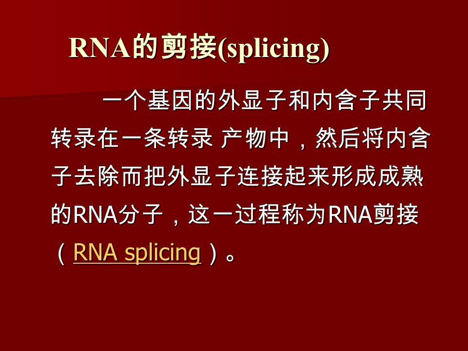 RNA 的剪接 (splicing) 一个基因的外显子和内含子共同 转录在一条转录 产物中,然后将内含 子去除而把外显子连接起来形成成熟 的 RNA 分子,这一过程称为 RNA 剪接 ( RNA splicing )。 一个基因的外显子和内含子共同 转录在一条转录 产物中,然后将内含 子去除而把外显子连接起来形成成熟 的 RNA 分子,这一过程称为 RNA 剪接 ( RNA splicing )。 RNA splicing RNA splicing