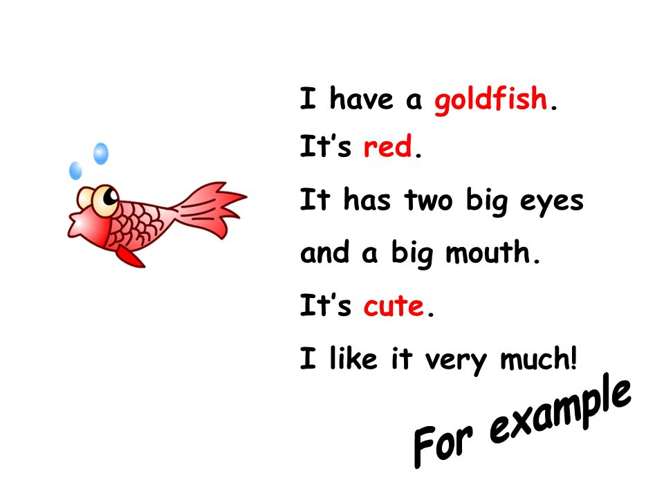 I have a goldfish. It's red. It has two big eyes and a big mouth. It's cute. I like it very much!