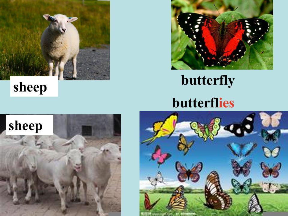 butterfly butterflies sheep
