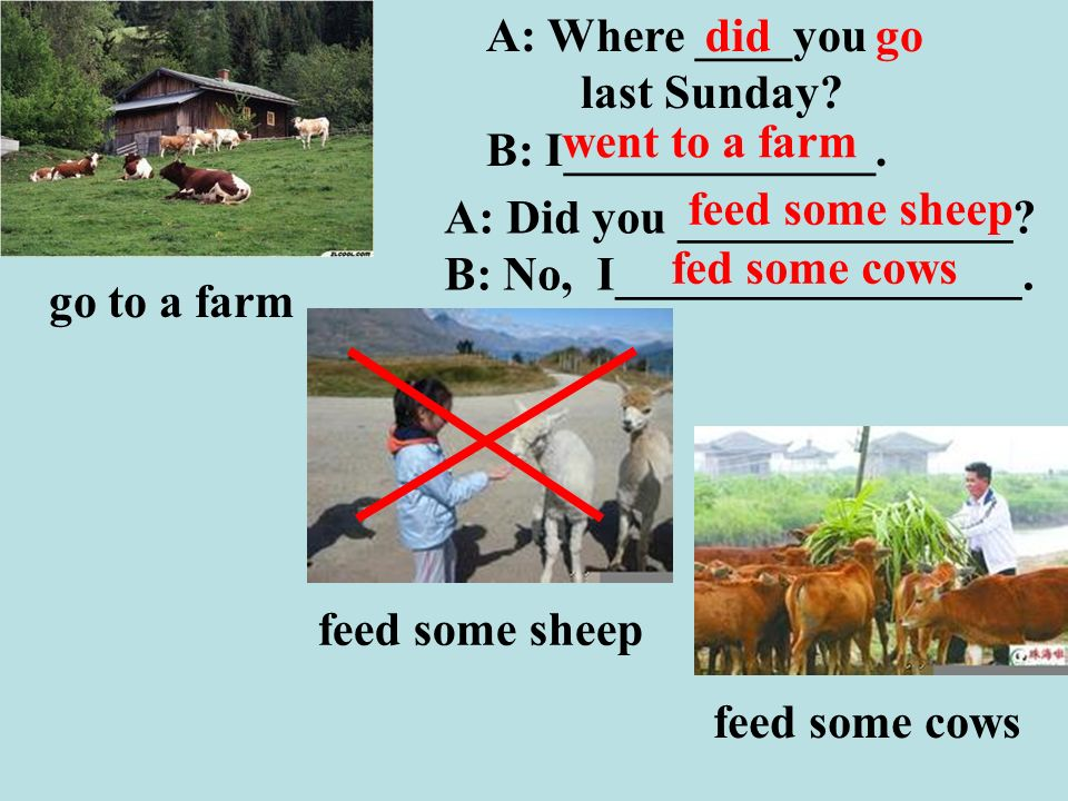 feed some sheep feed some cows A: Did you ______________.