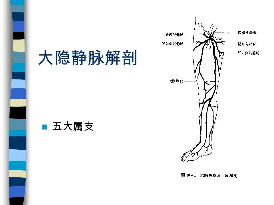 大隐静脉解剖 五大属支