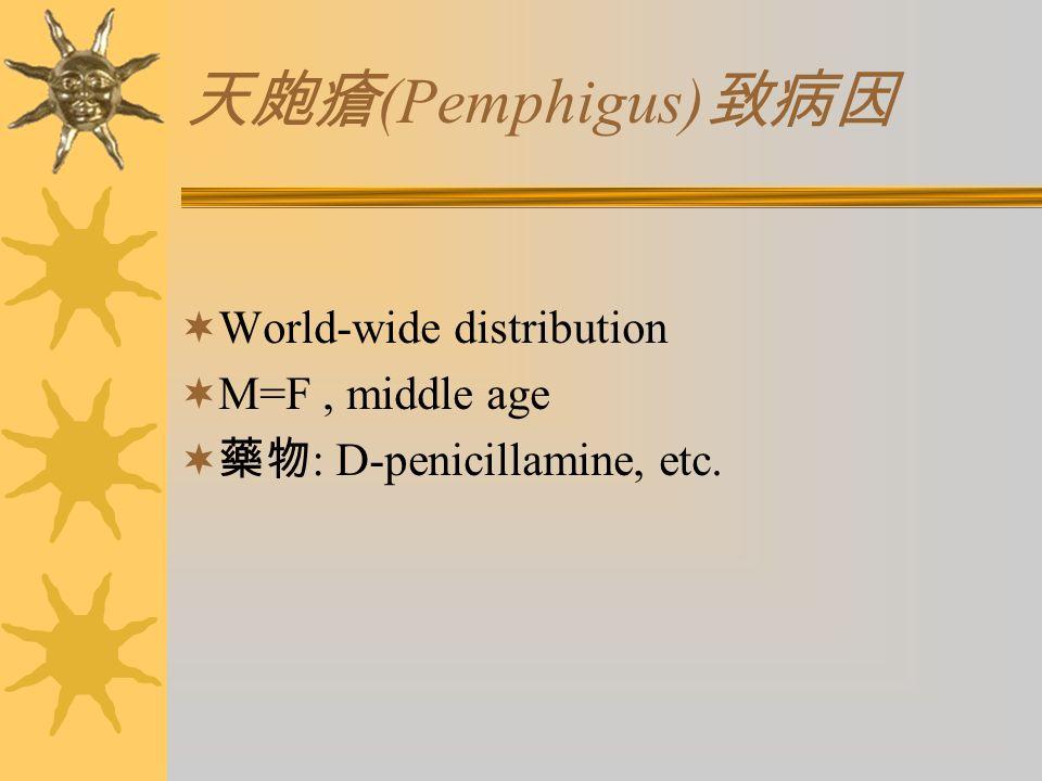 天皰瘡 (Pemphigus) 致病因  World-wide distribution  M=F, middle age  藥物 : D-penicillamine, etc.