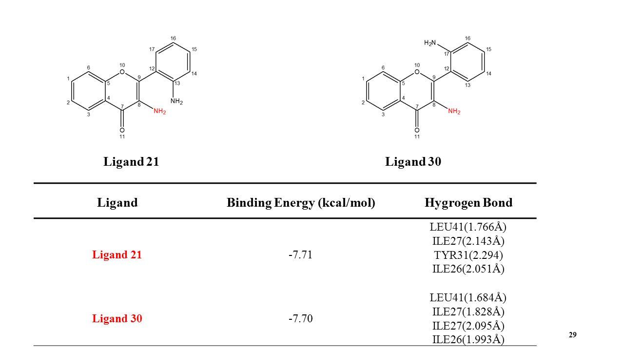 29 Ligand 21Ligand 30 LigandBinding Energy (kcal/mol)Hygrogen Bond Ligand 21-7.71 LEU41(1.766Å) ILE27(2.143Å) TYR31(2.294) ILE26(2.051Å) Ligand 30-7.70 LEU41(1.684Å) ILE27(1.828Å) ILE27(2.095Å) ILE26(1.993Å)