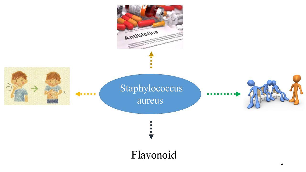 Staphylococcus aureus Flavonoid 4