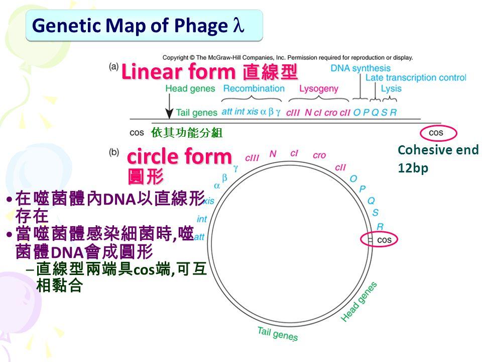Genetic Map of Phage 在噬菌體內 DNA 以直線形 存在 當噬菌體感染細菌時, 噬 菌體 DNA 會成圓形 – 直線型兩端具 cos 端, 可互 相黏合 Cohesive end 12bp Linear form 直線型 circle form 圓形 依其功能分組