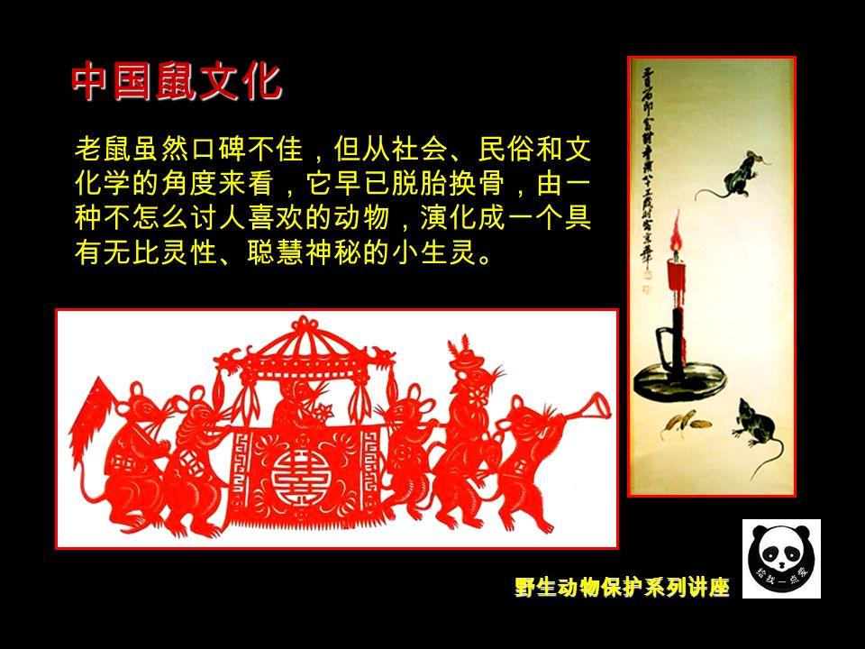 野生动物保护系列讲座 中国鼠文化 老鼠虽然口碑不佳,但从社会、民俗和文 化学的角度来看,它早已脱胎换骨,由一 种不怎么讨人喜欢的动物,演化成一个具 有无比灵性、聪慧神秘的小生灵。