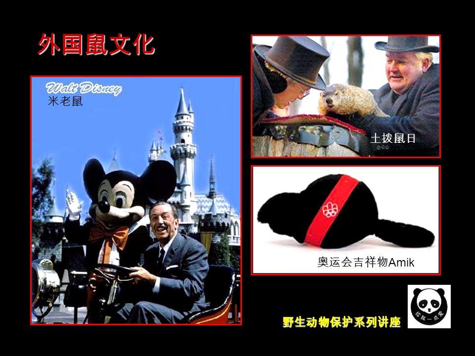 野生动物保护系列讲座 外国鼠文化 土拨鼠日 米老鼠 奥运会吉祥物 Amik