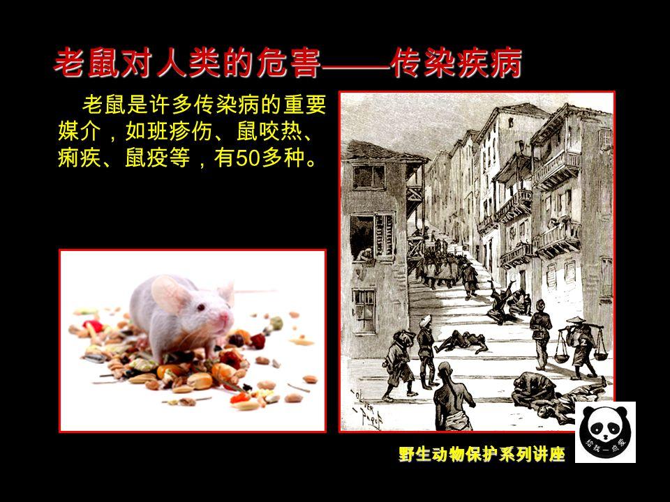 野生动物保护系列讲座 老鼠是许多传染病的重要 媒介,如班疹伤、鼠咬热、 痢疾、鼠疫等,有 50 多种。 老鼠对人类的危害 —— 传染疾病