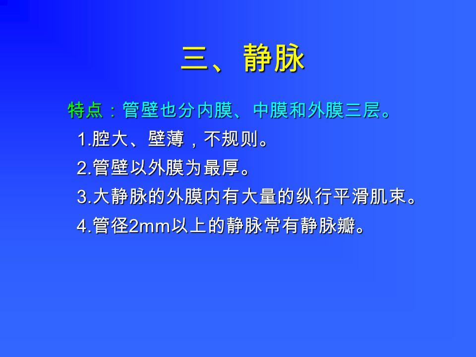 三、静脉 特点:管壁也分内膜、中膜和外膜三层。 1. 腔大、壁薄,不规则。 2. 管壁以外膜为最厚。 3. 大静脉的外膜内有大量的纵行平滑肌束。 4. 管径 2mm 以上的静脉常有静脉瓣。