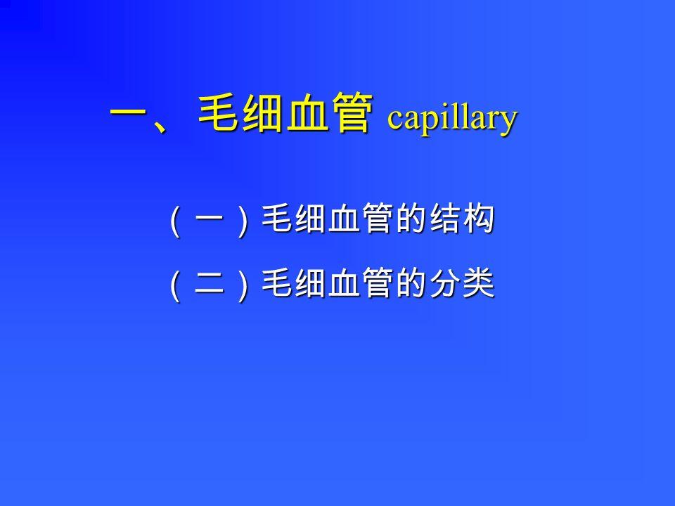 一、毛细血管 一、毛细血管 capillary (一)毛细血管的结构(二)毛细血管的分类