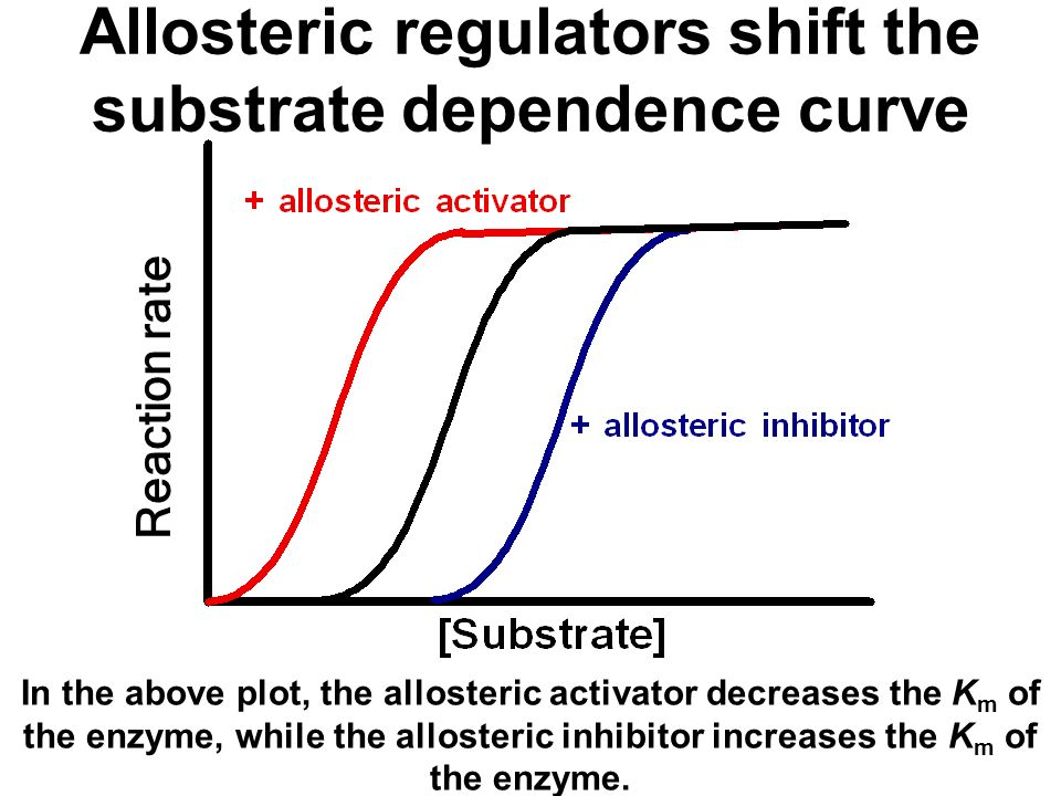 Allosteric regulators shift the substrate dependence curve Reaction rate In the above plot, the allosteric activator decreases the K m of the enzyme, while the allosteric inhibitor increases the K m of the enzyme.
