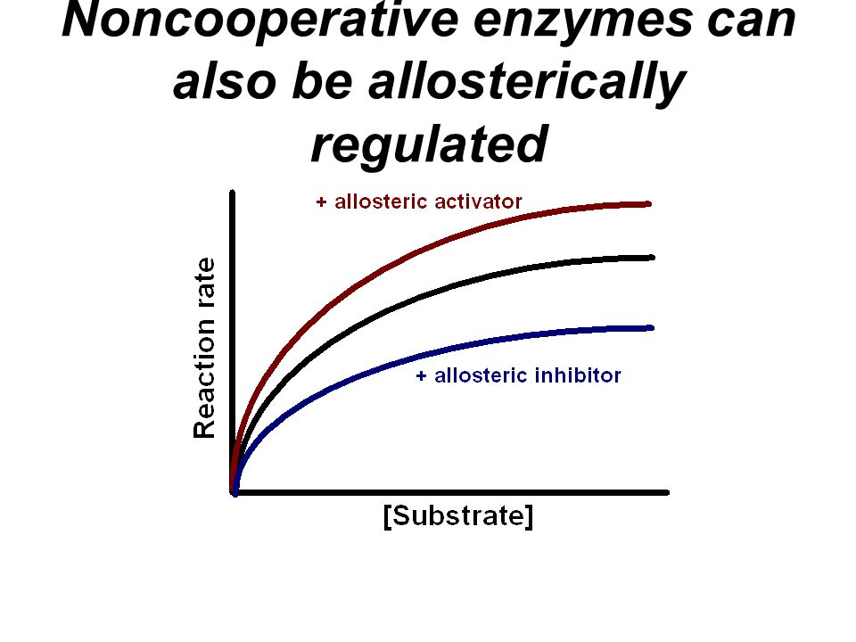 Noncooperative enzymes can also be allosterically regulated