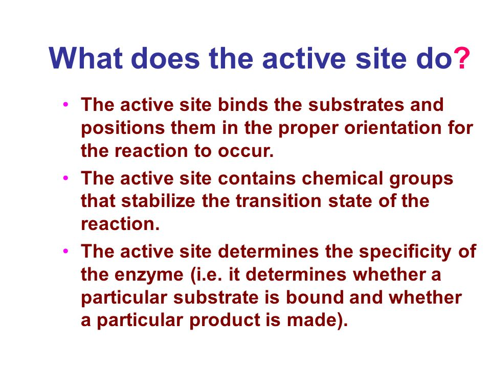 The active site binds the substrates and positions them in the proper orientation for the reaction to occur.