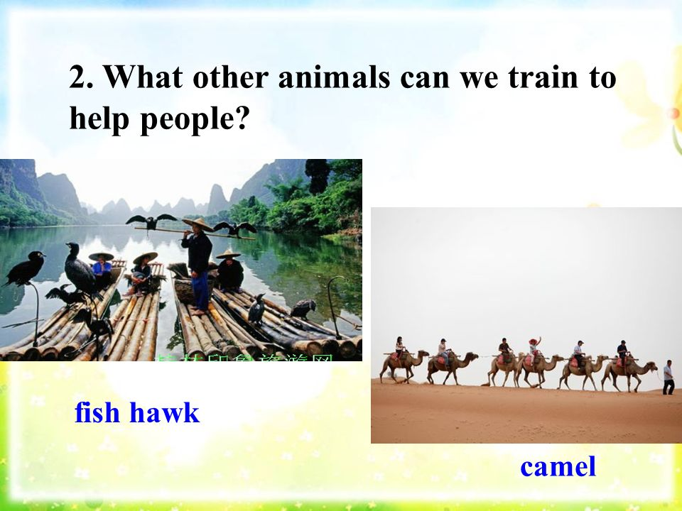 2. What other animals can we train to help people fish hawk camel