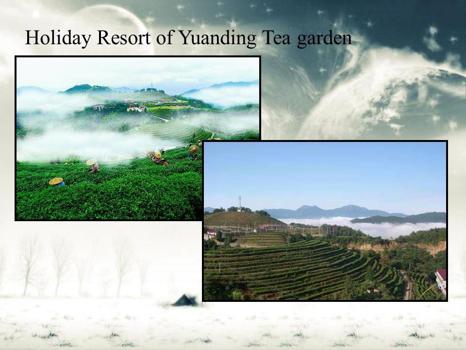 Holiday Resort of Yuanding Tea garden