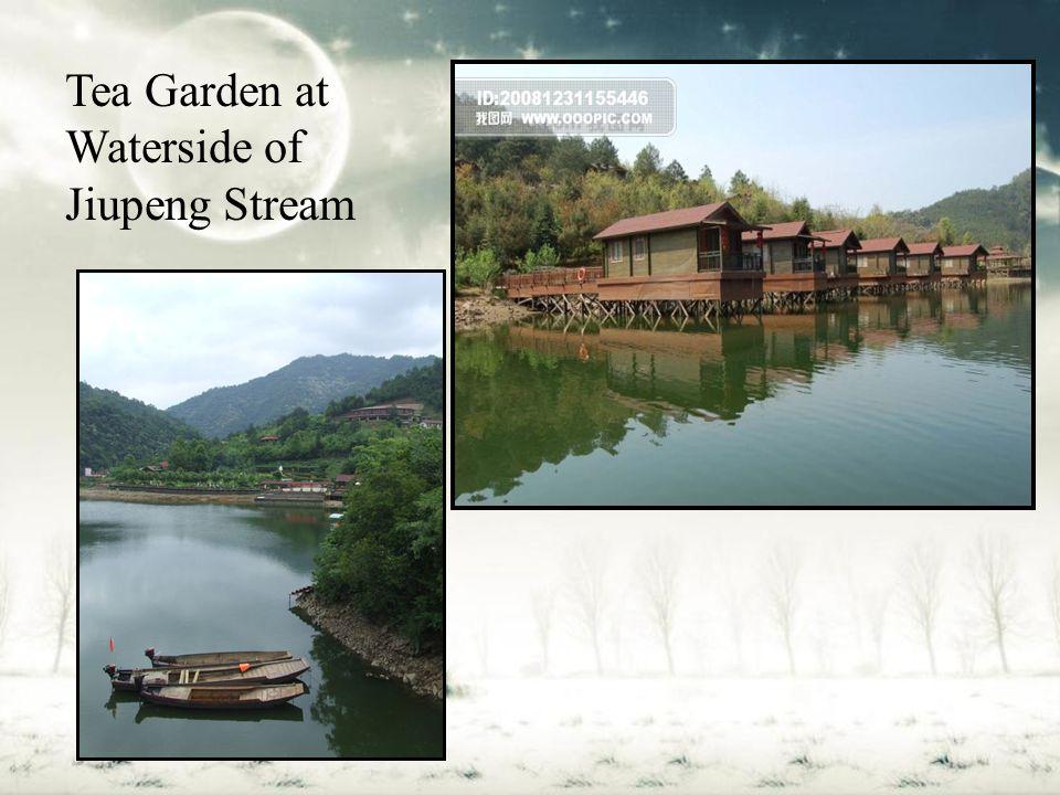 Tea Garden at Waterside of Jiupeng Stream