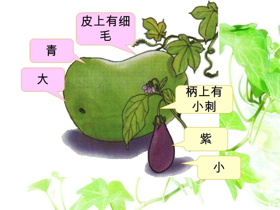 绿色圃中小学教育网 http://www.lspjy.com 你能不能飞到菜园去, 看看冬瓜和茄子长得 一样不一样? 不错。可是,你能不能 再去看看,还有什么不 一样 .