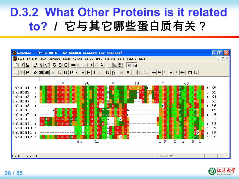 26 / 55 D.3.2 What Other Proteins is it related to / 它与其它哪些蛋白质有关?