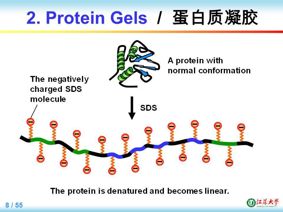 8 / 55 2. Protein Gels / 蛋白质凝胶