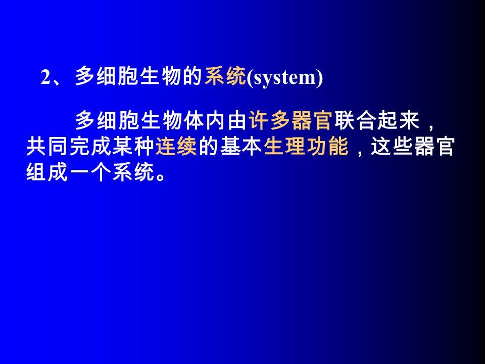 多细胞生物体内由许多器官联合起来, 共同完成某种连续的基本生理功能,这些器官 组成一个系统。 2 、多细胞生物的系统 (system)