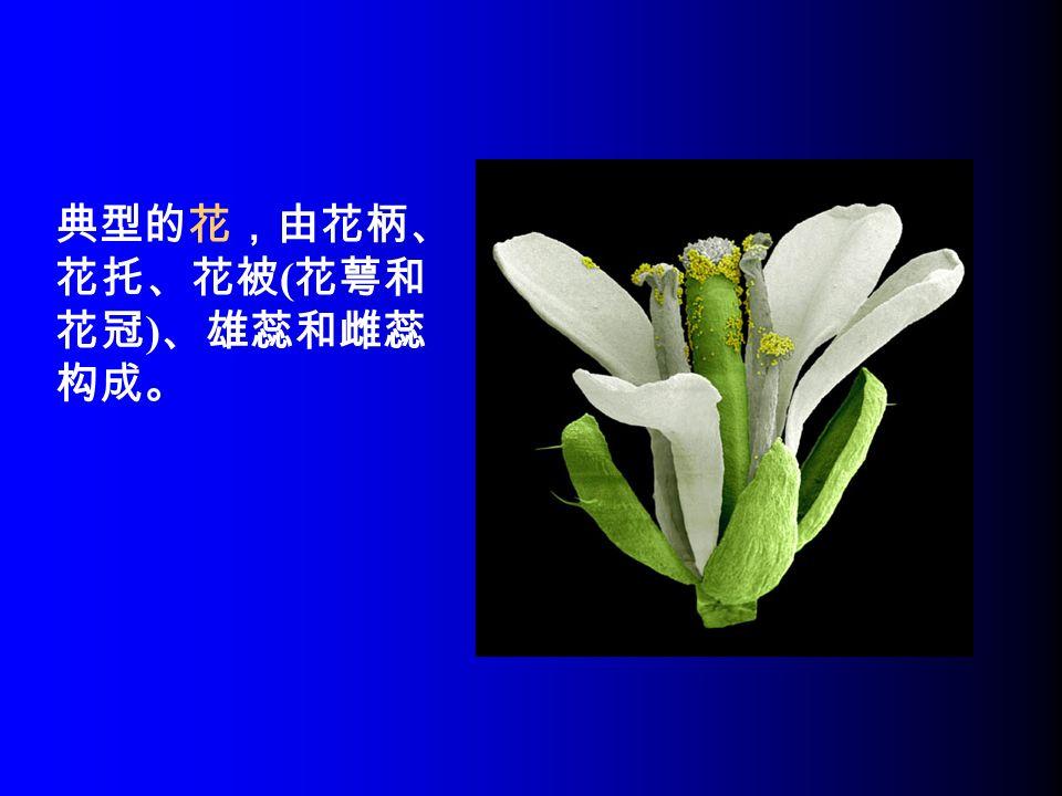 典型的花,由花柄、 花托、花被 ( 花萼和 花冠 ) 、雄蕊和雌蕊 构成。