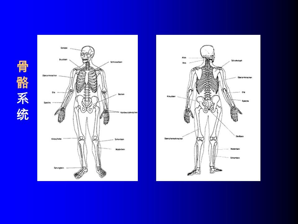 骨骼系统骨骼系统