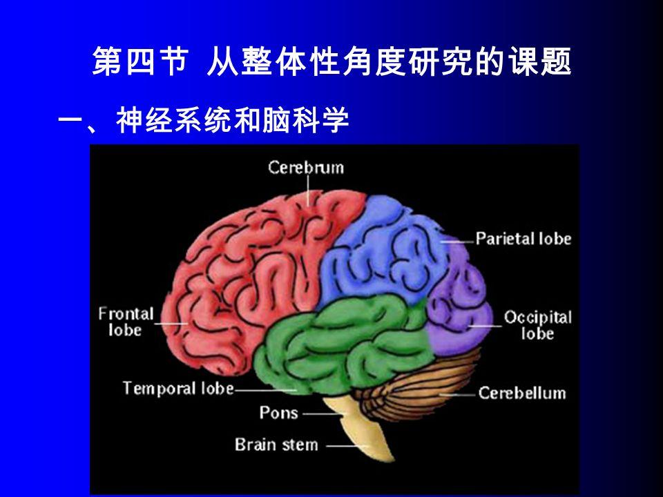 一、神经系统和脑科学 第四节 从整体性角度研究的课题