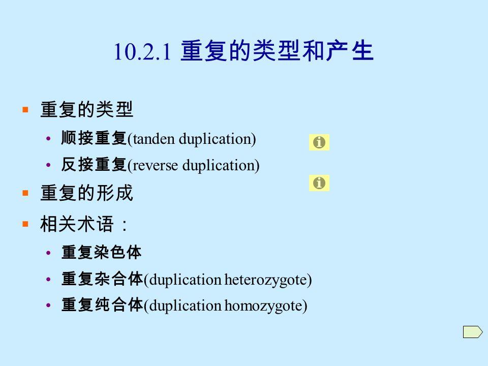 10.2 重复 (duplication)  染色体增加了自己某一区段的现象  10.2.1 重复的类型和产生  10.2.2 重复的细胞学特征与鉴定  10.2.3 重复的遗传效应