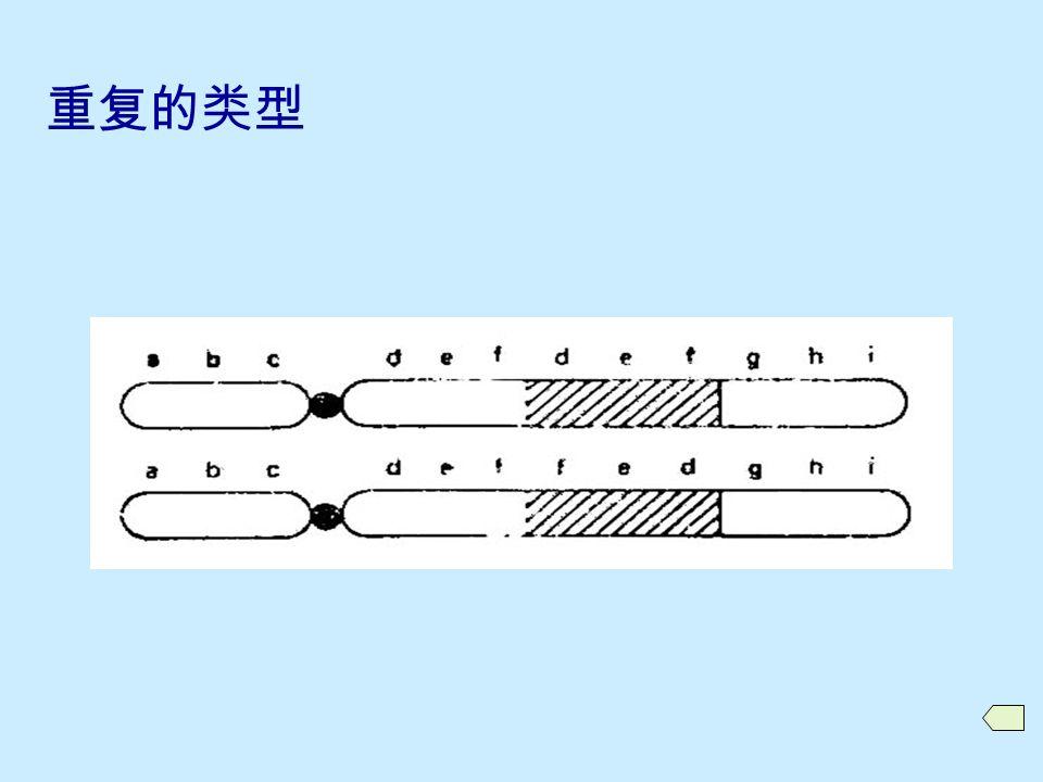 10.2.1 重复的类型和产生  重复的类型 顺接重复 (tanden duplication) 反接重复 (reverse duplication)  重复的形成  相关术语: 重复染色体 重复杂合体 (duplication heterozygote) 重复纯合体 (duplication homozygote)