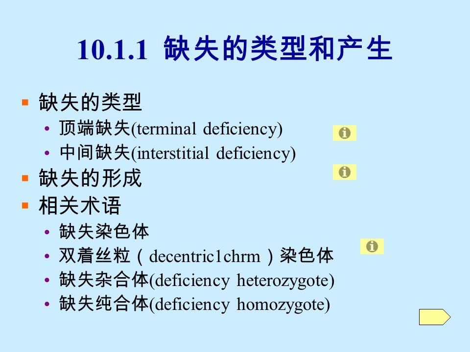 10.1 缺失 (deletion/deficiency)  缺失:指染色体断裂后发生错接时,丢失了 原有的某一区段。  10.1.1 缺失的类型和产生  10.1.2 缺失的细胞学鉴定  10.1.3 缺失的遗传效应