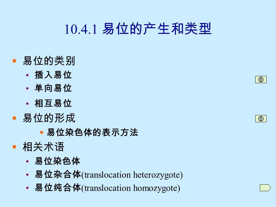 10.4 易位 (translocation)  非同源染色体之间染色体节段的转移  10.4.1 易位的产生和类型  10.4.2 易位的染色体行为  10.4.3 易位的的遗传效应  10.4.4 易位的意义和应用