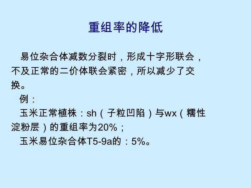 图 10-17 玉米 T5-2 两对杂合基因的位置 在玉米的 T5-2 中,位于 5 号染色体的 bt (脆弱胚乳)基因,与位于 2 号染色体的 b (花青素加强)基因表现不完全连锁,称为假连锁。这是 因为交替式分离产生的可育配子的基因型,基本上是( bt , b )和( Bt , B );少数重组型个体是该易位杂合体在两对基因间发生交换而产生的。 独立基因的假连锁..\genetic movies\ 易位杂合体的假连锁.MOV
