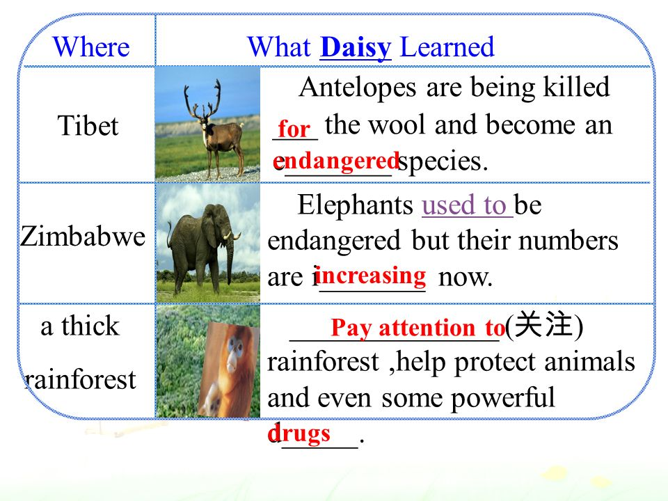 What Learned Tibet Zimbabwe a thick rainforest Antelopes are being killed ___ the wool and become an e_______ species.