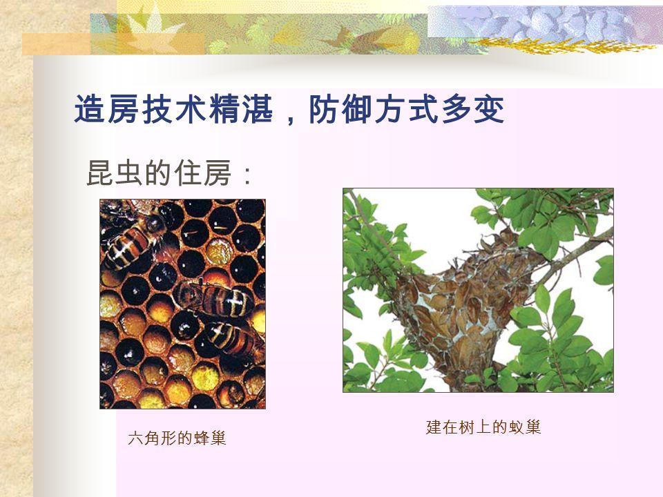 造房技术精湛,防御方式多变 昆虫的住房: 六角形的蜂巢 建在树上的蚁巢