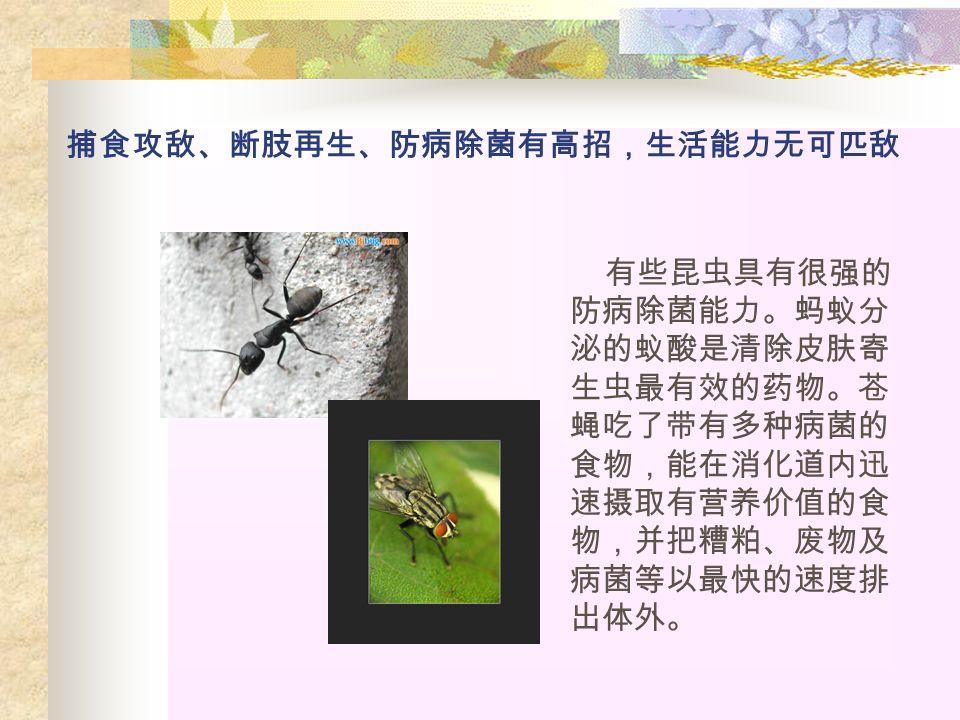 捕食攻敌、断肢再生、防病除菌有高招,生活能力无可匹敌 有些昆虫具有很强的 防病除菌能力。蚂蚁分 泌的蚁酸是清除皮肤寄 生虫最有效的药物。苍 蝇吃了带有多种病菌的 食物,能在消化道内迅 速摄取有营养价值的食 物,并把糟粕、废物及 病菌等以最快的速度排 出体外。