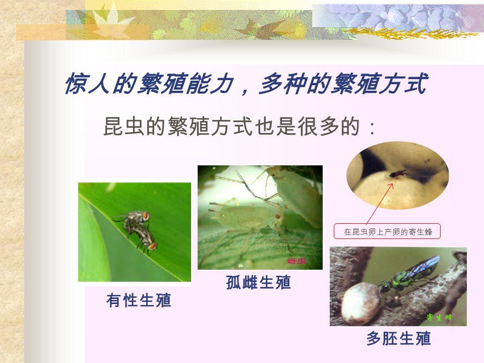 惊人的繁殖能力,多种的繁殖方式 昆虫的繁殖方式也是很多的: 有性生殖 孤雌生殖 多胚生殖 在昆虫卵上产卵的寄生蜂