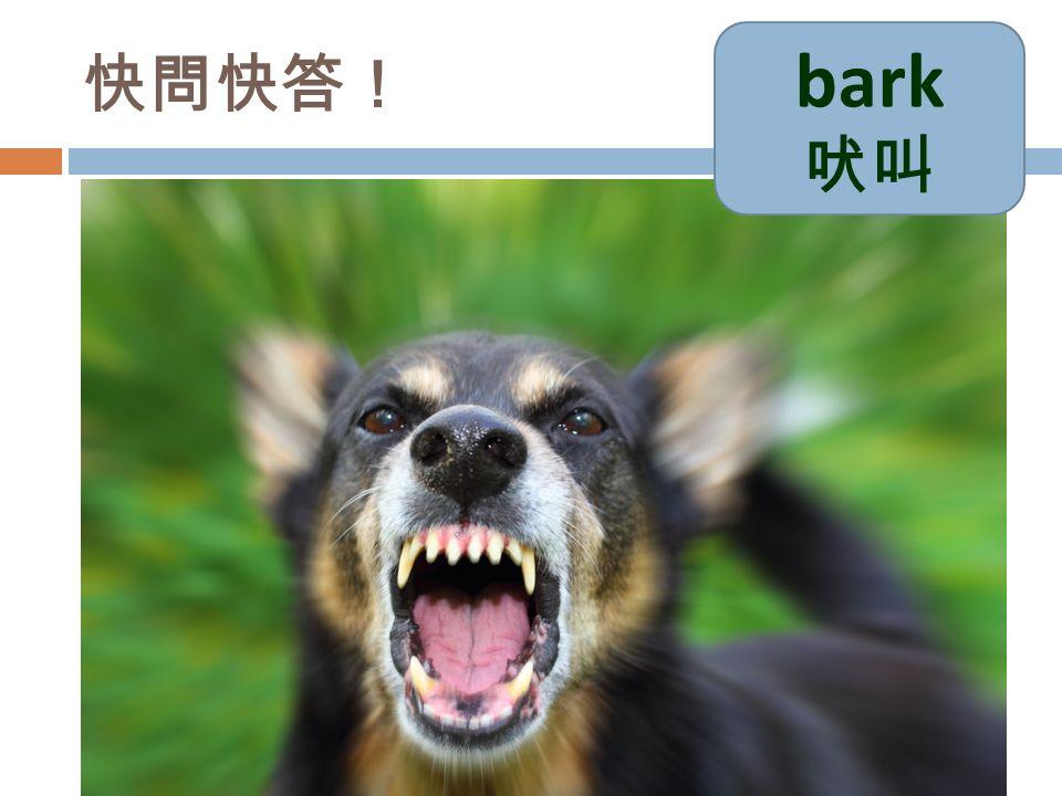 快問快答! bark 吠叫