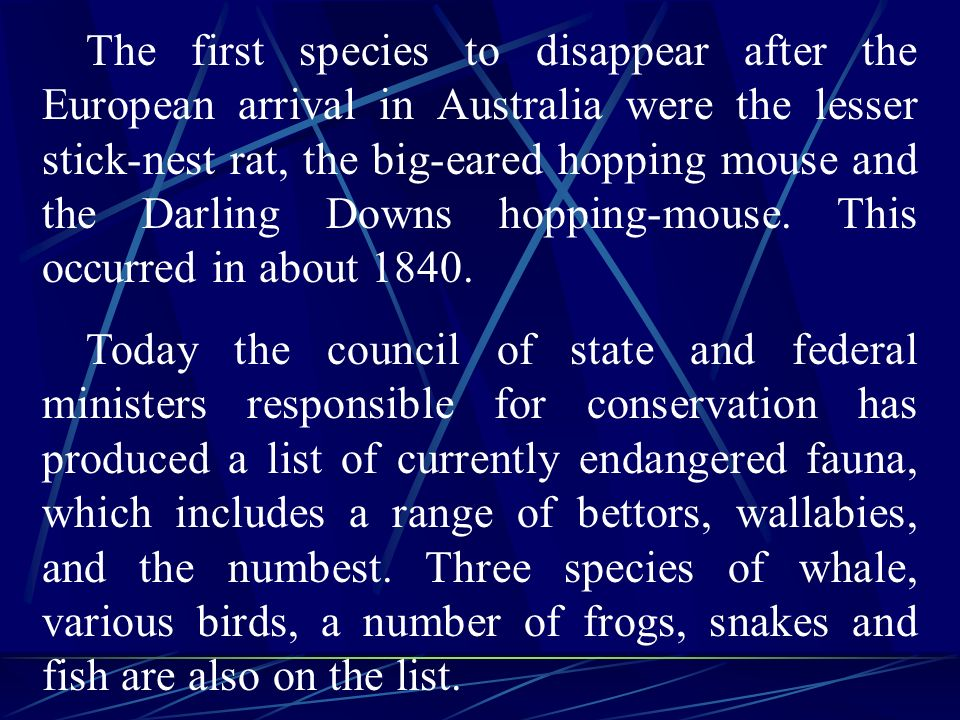The first species to disappear after the European arrival in Australia were the lesser stick-nest rat, the big-eared hopping mouse and the Darling Downs hopping-mouse.