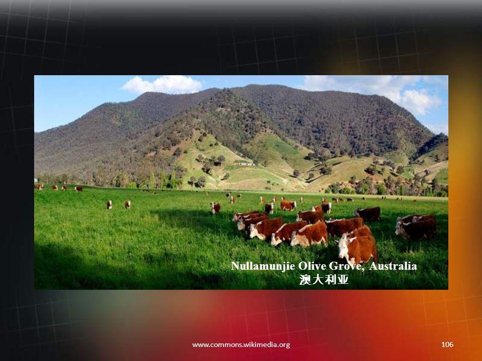 105www.commons.wikimedia.org McMillan's Lookout, Australia 澳大利亚
