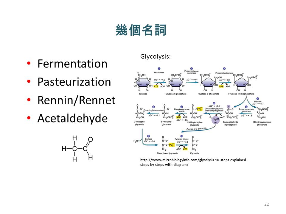 幾個名詞 Fermentation Pasteurization Rennin/Rennet Acetaldehyde 22 Glycolysis:   steps-by-steps-with-diagram/