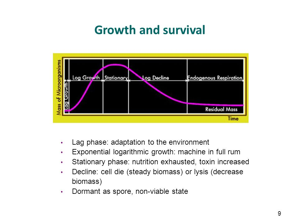Growth and survival Lag phase: adaptation to the environment Exponential logarithmic growth: machine in full rum Stationary phase: nutrition exhausted, toxin increased Decline: cell die (steady biomass) or lysis (decrease biomass) Dormant as spore, non-viable state 9