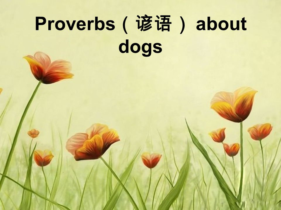 Proverbs (谚语) about dogs